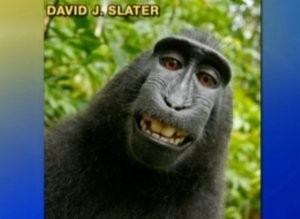 macaco, notizie animali, notizie pazze, scimmia, stranezze, curiosità dal mondo, notizie incredibili, assurdo, notizie divertenti