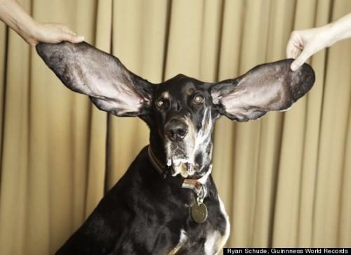 harbor orecchie piu lunghe.jpg