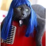 Parrucche per gatti
