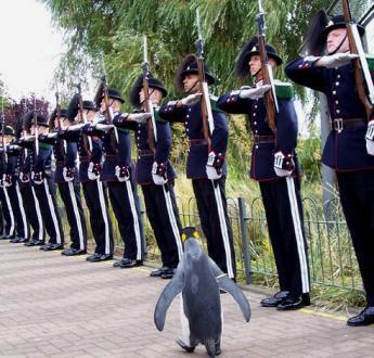 Un pinguino alla corte di Scozia