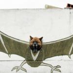 Ecco il cane pipistrello!
