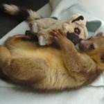 Tra lemuri, di peluche o in carne e ossa, ci si in