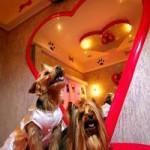 Puppymotel, un amore di hotel